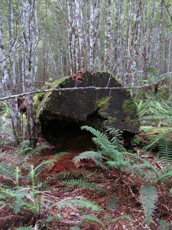 Forest Walks Lodge: Fallen Giant