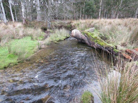 Forest Walks Lodge: Stream