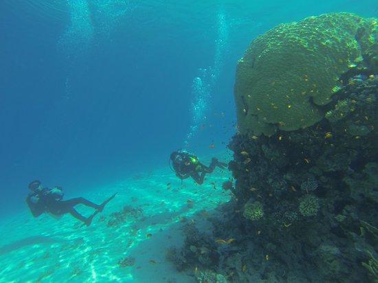 La Sirene Resort: Blueforce Diving Nuweiba/ La sirene