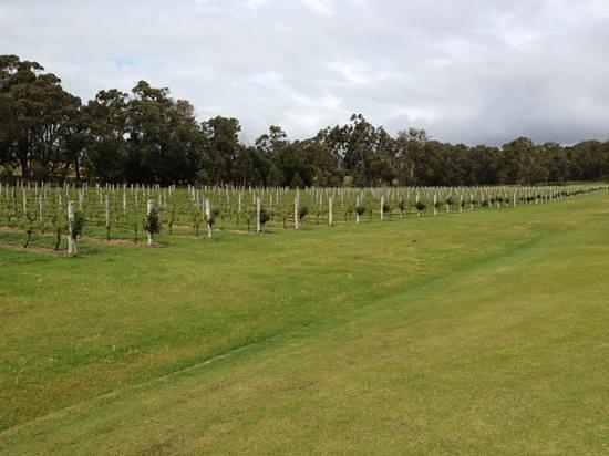 Laurance of Margaret River: Vines.