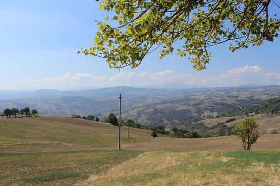 Agriturismo Podere Prasiano: Landschaft