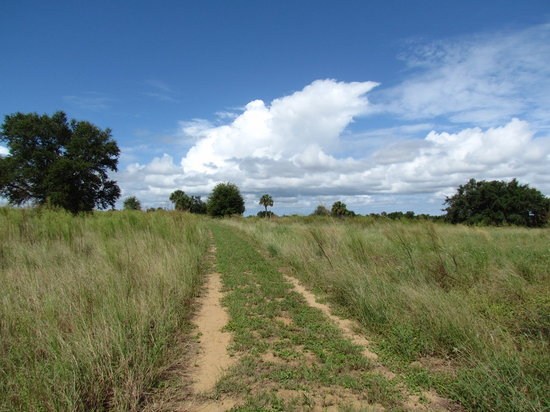 Ferndale Preserve