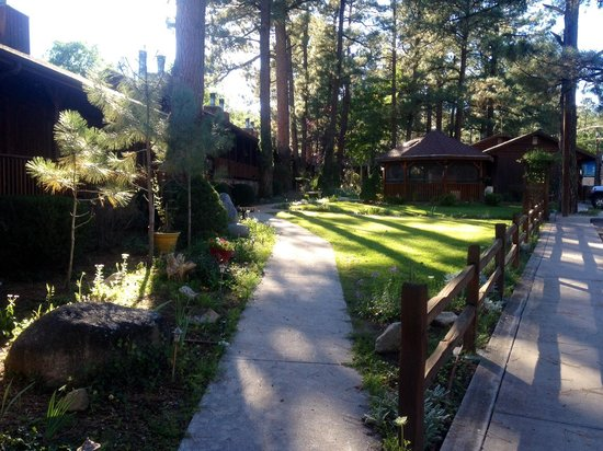 Shadow Mountain Lodge and Cabins : Pretty Views