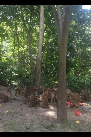 Monkey Hill: ลิงกำลังกินอาหาร