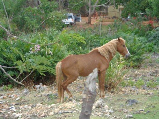 Grand Paradise Samana: Horses near resort