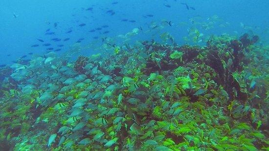 Carey Dive Center: Reef teeming with sealife