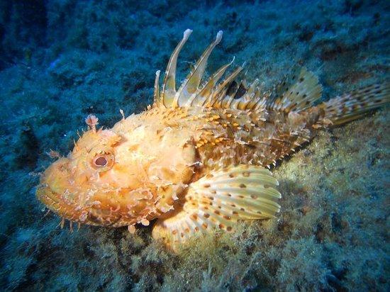 Diving Agency