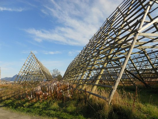 Thon Hotel Lofoten: Not quite the grounds but fish drying racks in walking distance