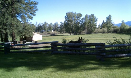 Deer Crossing Bed and Breakfast: One of the beautiful pastures