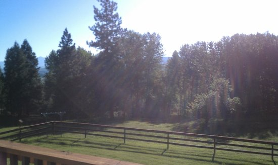 Deer Crossing Bed and Breakfast : Beautiful morning shot with the trees for the Big Sky suite