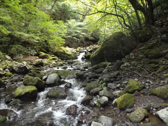 Kawamata Higashi Canyon Shizen Kansatsuen