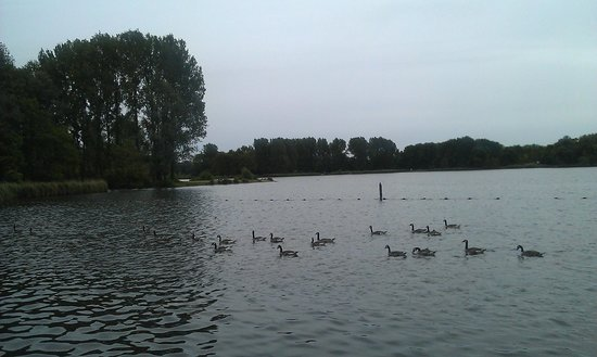 Delftse Hout: Ducks