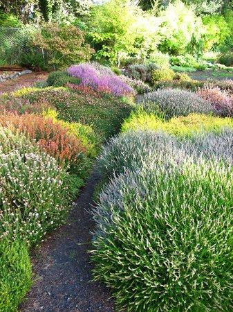 Connie Hansen Garden Conservancy: herb garden