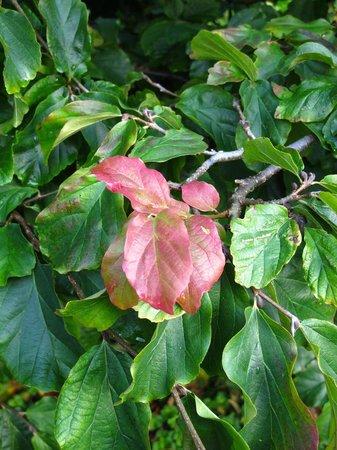 Connie Hansen Garden Conservancy: fall color