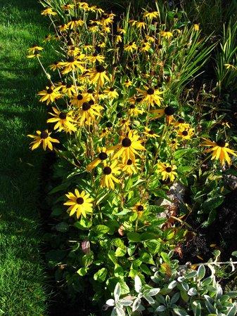 Connie Hansen Garden Conservancy: splash of yellow