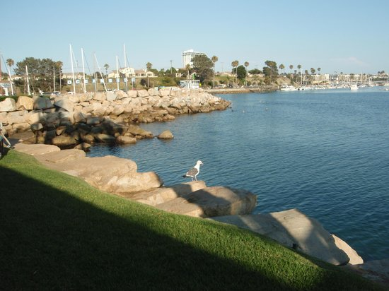 Oceanside Marina Suites: Another Permanent Resident