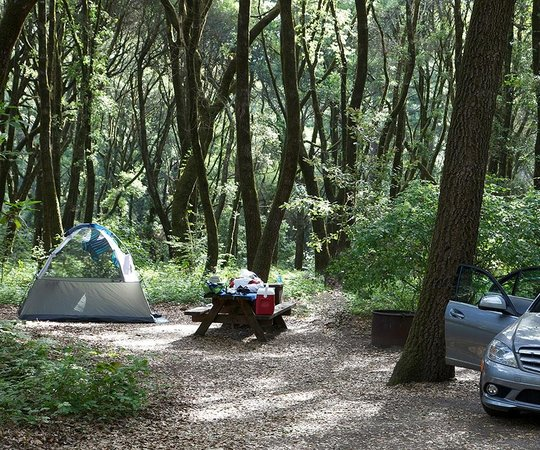 Our Awesome Campsite But Amongst Solid Poison Oak