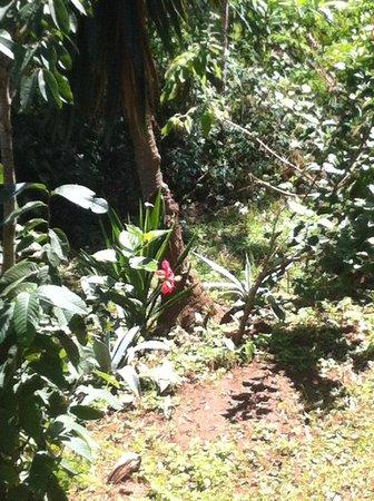 Usambara Adventures -  Day Tours : forest