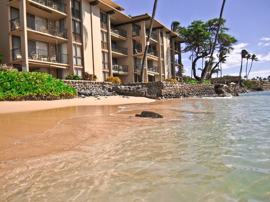 Nohonani Condos: View of condo building and turtle from beach