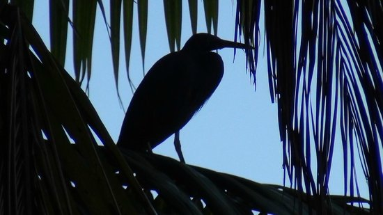 Vahine Private Island Resort: Baby Heron almost ready to leave the nest