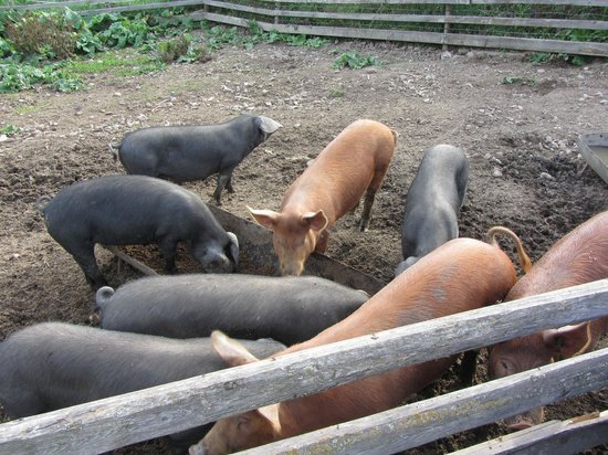 Crannog Ales: The happiest pigs in the world, at Crannog