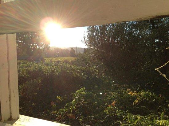 Shady Oaks Country Inn: View from Sunny Hideaway bathroom window