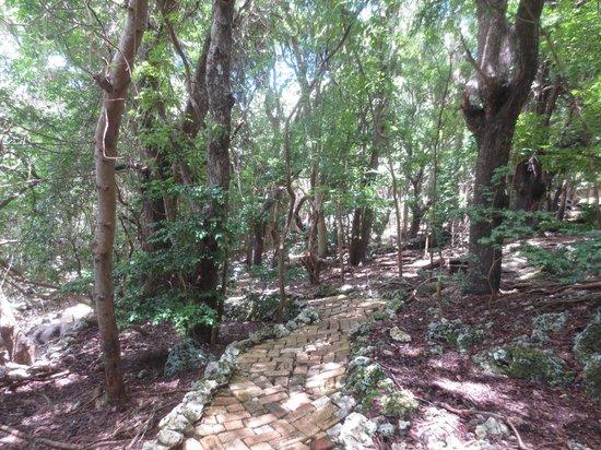 Barbados Wildlife Reserve: Wildlife Reserve Forest