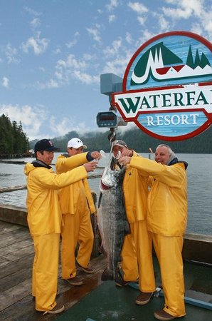 Waterfall Resort Alaska: 2013 Tournament Winner - 62.9 lbs!