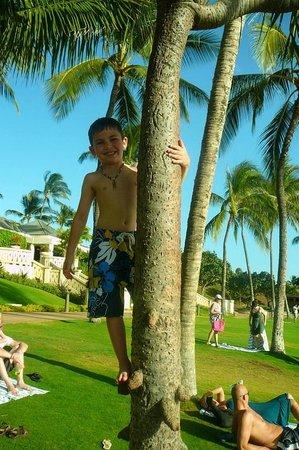 Beach Villas at Ko Olina: Palm tree