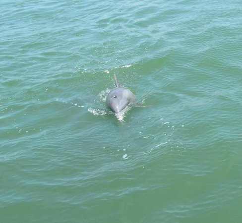 Island Boat Adventures : Dolphin