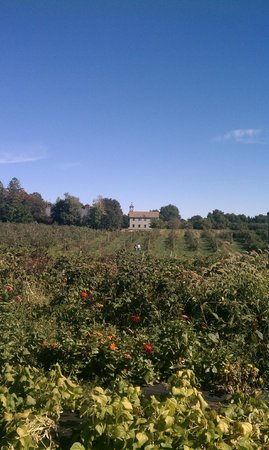 Peabody, MA: View of the orchard from entrance