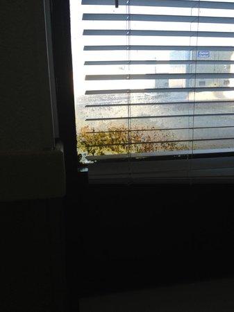 PG Waterfront Hotel & Suites: window