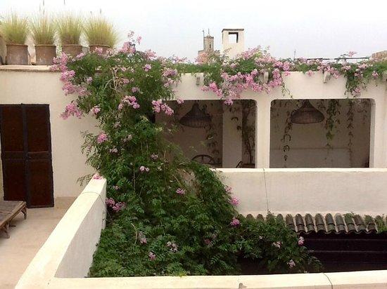 Riad Maiya : terrasse