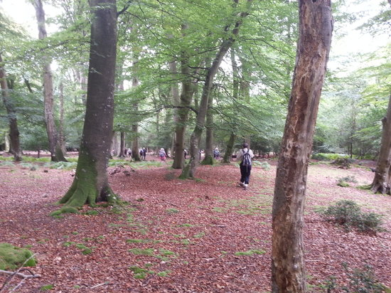 Fuzzacker Guided Walks and Tours: Off the beaten track