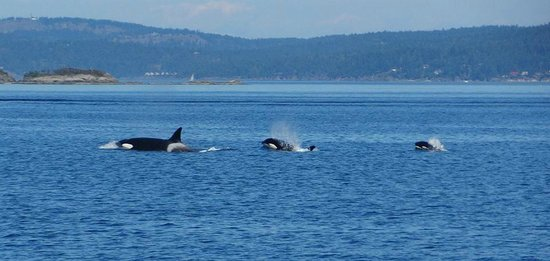 Maya's Legacy Whale Watching: Happy family