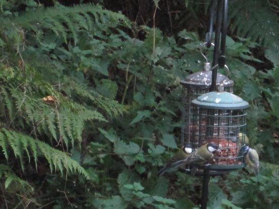 Kilsby Country House: Enjoy feeding time