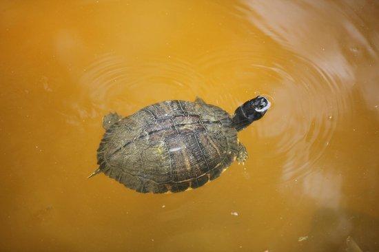 Oatland Island Wildlife Center: TURTLE