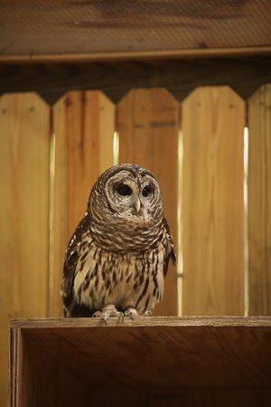 Oatland Island Wildlife Center: OWL