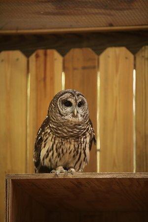Oatland Island Wildlife Center : OWL