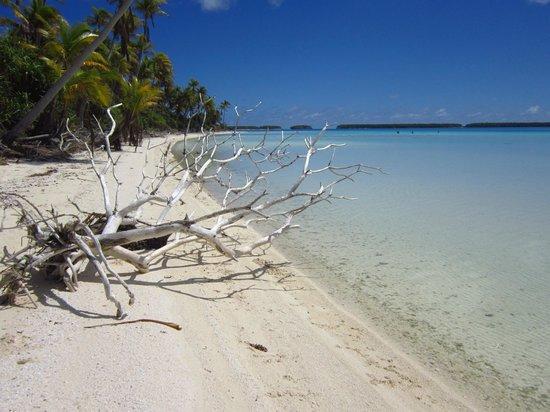 Escapade Charter Tahiti, Day tours : Tetiaroa