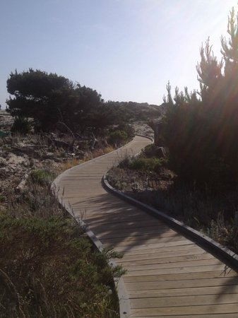 Asilomar Conference Grounds: walking path
