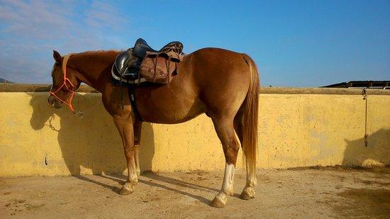 Pedro @ Tenuta Agricola dell'Uccellina Horseriding