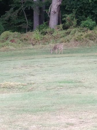 Rock Creek Park Golf Course: Fairway; note the condition of the turf.  The deer is enjoying it however.