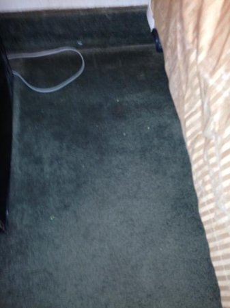 Days Inn by Wyndham Blairsville: Dirty carpet by the bed