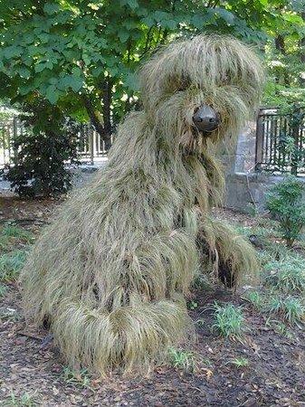 Atlanta Botanical Garden: Shaggy dog