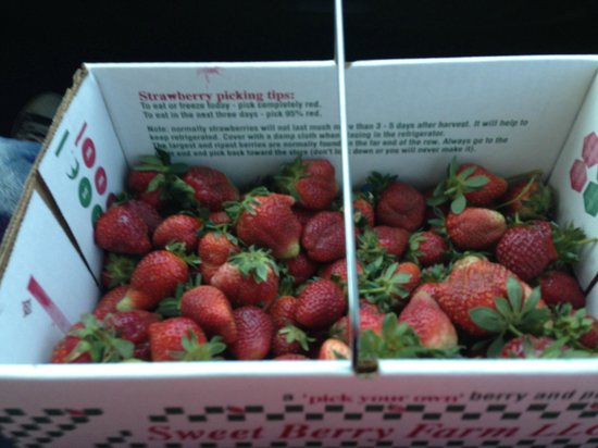 Sweet Berry Farm: our basket