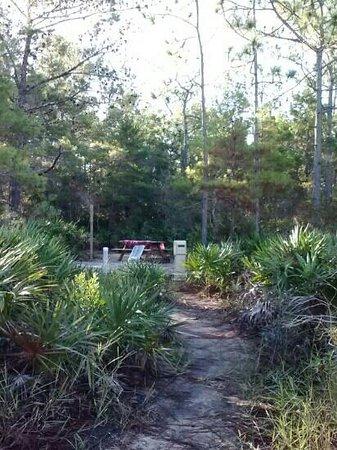 Topsail Beach State Preserve: walk to site
