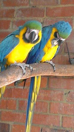 Rainbow Jungle: 2 beautiful birds