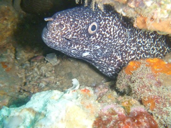 Tayrona Dive Center: una morena captada durante la inmersion