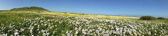 Saldanha, Afrika Selatan: Flowers